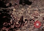 Image of US Marines Okinawa Ryukyu Islands, 1945, second 4 stock footage video 65675052763