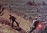Image of Marines Okinawa Ryukyu Islands, 1945, second 3 stock footage video 65675052787
