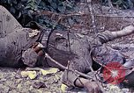 Image of dead bodies of Japanese soldiers Okinawa Ryukyu Islands, 1945, second 10 stock footage video 65675052819