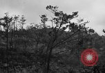 Image of 7th Marine Division Okinawa Ryukyu Islands, 1945, second 3 stock footage video 65675052921
