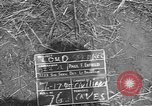 Image of 32nd Infantry 7th Division Okinawa Ryukyu Islands, 1945, second 2 stock footage video 65675052970
