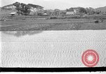 Image of rice paddies Japan, 1920, second 3 stock footage video 65675052988