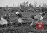 Image of Russians Archangel Russia, 1918, second 11 stock footage video 65675053040