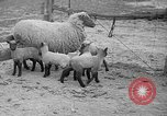 Image of quintuplet lambs Wilmington Ohio USA, 1936, second 7 stock footage video 65675053233