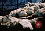 Image of Navy burial at sea Pacific Ocean, 1944, second 9 stock footage video 65675053282