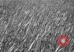 Image of Russian farm Russia Soviet Union, 1942, second 6 stock footage video 65675053673