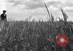 Image of Russian farm Russia Soviet Union, 1942, second 8 stock footage video 65675053673