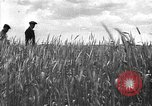 Image of Russian farm Russia Soviet Union, 1942, second 9 stock footage video 65675053673
