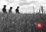 Image of Russian farm Russia Soviet Union, 1942, second 10 stock footage video 65675053673