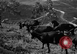 Image of Apennines Mountains Italy, 1951, second 9 stock footage video 65675053700