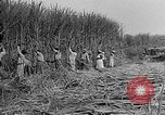 Image of sugar cane cutter New Roads Louisiana USA, 1938, second 11 stock footage video 65675054206