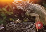Image of Iguana Lizard Fort Sherman Panama, 1969, second 1 stock footage video 65675054598