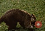 Image of Coatimundi Fort Sherman Panama, 1969, second 8 stock footage video 65675054601
