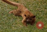 Image of Lemur Fort Sherman Panama, 1969, second 1 stock footage video 65675054602