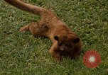 Image of Lemur Fort Sherman Panama, 1969, second 4 stock footage video 65675054602