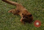 Image of Lemur Fort Sherman Panama, 1969, second 11 stock footage video 65675054602