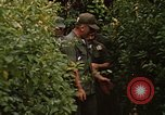 Image of jungle traps Fort Sherman Panama, 1969, second 12 stock footage video 65675054607