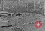 Image of Fox fur farm Alaska USA, 1929, second 2 stock footage video 65675054667