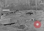 Image of Fox fur farm Alaska USA, 1929, second 3 stock footage video 65675054667