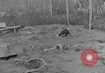 Image of Fox fur farm Alaska USA, 1929, second 4 stock footage video 65675054667