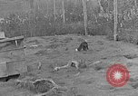 Image of Fox fur farm Alaska USA, 1929, second 5 stock footage video 65675054667