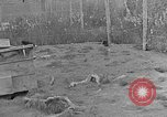 Image of Fox fur farm Alaska USA, 1929, second 6 stock footage video 65675054667
