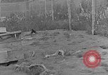 Image of Fox fur farm Alaska USA, 1929, second 8 stock footage video 65675054667