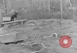 Image of Fox fur farm Alaska USA, 1929, second 9 stock footage video 65675054667