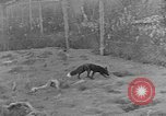 Image of Fox fur farm Alaska USA, 1929, second 11 stock footage video 65675054667
