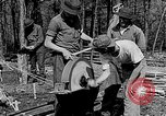 Image of reforestation program Washington DC USA, 1936, second 6 stock footage video 65675054706