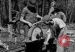 Image of reforestation program Washington DC USA, 1936, second 8 stock footage video 65675054706