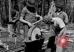 Image of reforestation program Washington DC USA, 1936, second 9 stock footage video 65675054706