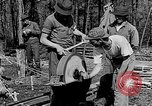 Image of reforestation program Washington DC USA, 1936, second 12 stock footage video 65675054706