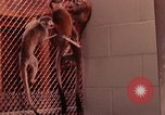 Image of squirrel monkeys United States USA, 1968, second 11 stock footage video 65675054802