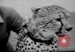 Image of Whipsnade Zoo Whipsnade England, 1965, second 12 stock footage video 65675054828