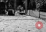 Image of lions The Hague Netherlands, 1930, second 7 stock footage video 65675054969