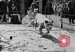 Image of lions The Hague Netherlands, 1930, second 11 stock footage video 65675054969