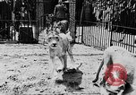 Image of lions The Hague Netherlands, 1930, second 12 stock footage video 65675054969