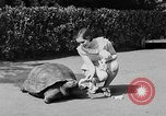 Image of world's oldest tortoise San Francisco California USA, 1930, second 12 stock footage video 65675054981