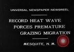 Image of goat herd Mesquite New Mexico USA, 1931, second 7 stock footage video 65675054991