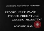 Image of goat herd Mesquite New Mexico USA, 1931, second 11 stock footage video 65675054991