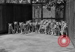 Image of lion cubs El Monte California USA, 1933, second 11 stock footage video 65675055008
