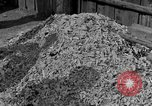 Image of Buchenwald concentration camp Germany, 1945, second 1 stock footage video 65675055137