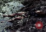 Image of dead Viet Cong Vietnam Vinh Te Canal, 1969, second 8 stock footage video 65675055543