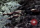 Image of dead Viet Cong Vietnam Vinh Te Canal, 1969, second 10 stock footage video 65675055543