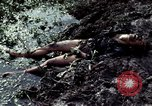 Image of dead Viet Cong Vietnam Vinh Te Canal, 1969, second 11 stock footage video 65675055543