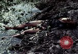 Image of dead Viet Cong Vietnam Vinh Te Canal, 1969, second 12 stock footage video 65675055543