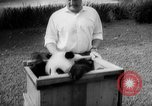 Image of Giant Panda Chi Chi Frankfurt Germany, 1958, second 6 stock footage video 65675055655