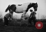 Image of girls Holland Netherlands, 1954, second 12 stock footage video 65675055708