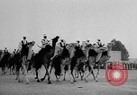 Image of Camel Corps Algeria, 1957, second 7 stock footage video 65675055742